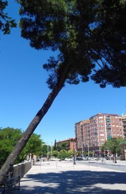20170707034141-pino-del-parque.jpg